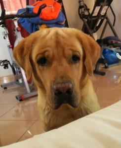 The dog of Ivano Cheers: Pam